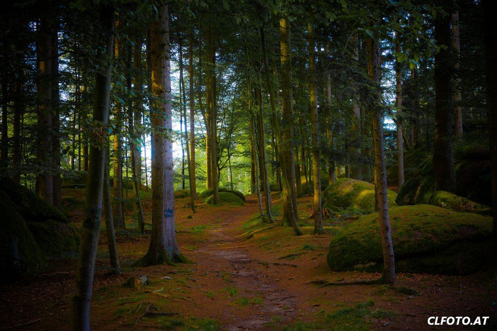 Im Wald bei Rechberg (Bezirk Perg)